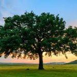 tree-headshot-placeholder